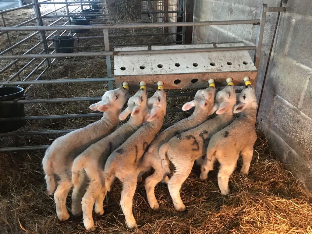 Farm Life (2)